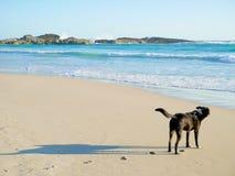 Schwarzer Hund auf dem Strand Stockbild