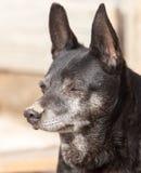 Schwarzer Hund auf der Natur Lizenzfreie Stockfotografie