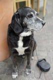 Schwarzer Hund auf der Straße Stockfoto