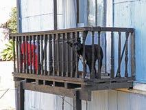 Schwarzer Hund am Balkon Stockfoto