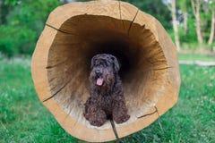Schwarzer Hund, der auf einem Baumstumpf sitzt Lizenzfreies Stockfoto