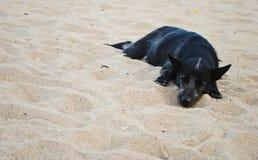 Schwarzer Hund, der auf Sandstrand schläft Lizenzfreie Stockfotografie