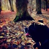 Schwarzer Hund, der die Ansicht bewundert Stockfoto