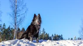 Schwarzer Hund, der im Schnee sitzt lizenzfreie stockfotografie