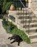 Schwarzer Hund, der nahe dem Treppenhaus liegt Stockfotos
