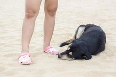 Schwarzer Hund, der nahe Leuten auf Strand schläft Stockbilder