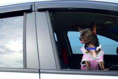 Schwarzer Hund im Auto Stockbild