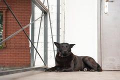 SCHWARZER HUND IST, das Haus zu schützen lizenzfreie stockfotografie