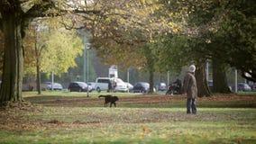 Schwarzer Hund Labrador retriever, das in einem Stadt Park spielt, stock video footage