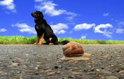 Schwarzer Hund und Schnecke Stockfotos