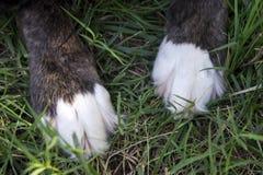 Schwarzer Hundetatzen mit weißen Tipps auf Gras lizenzfreie stockbilder