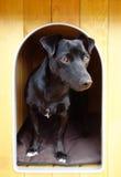 Schwarzer kleiner Hund in der Hundehütte stockfotografie