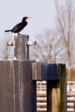 Schwarzer Kormoranvogel auf einem Schiffspoller Lizenzfreies Stockfoto