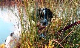 Schwarzer Labrador-Mann, Stockfotografie