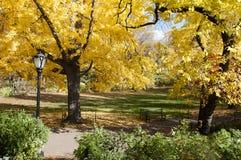 Schwarzer Laternenpfahl und gelbe Bäume auf Central Park, New York Lizenzfreie Stockbilder