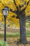Schwarzer Laternenpfahl und gelbe Bäume auf Central Park, New York Lizenzfreies Stockfoto