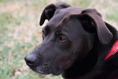 Schwarzer Mischzucht-Hund draußen Stockbild