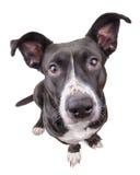 Schwarzer netter Hund, der Kamera betrachtet Stockfoto