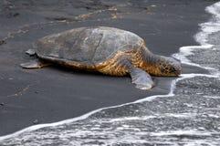 Schwarzer Sand und Seeschildkröte Stockbilder