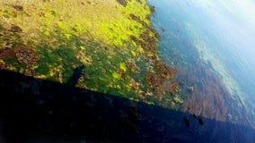 Schwarzer Schatten eines Mannes, der auf einen Pier voll refledted im Wasser von einem blauen Meer von Meerespflanzen geht stockbilder