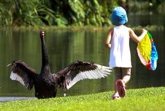 Schwarzer Schwan auf Lager und erschrickt durch ein kleines Mädchen stockfoto