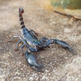 Schwarzer Skorpion Lizenzfreies Stockfoto