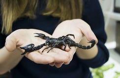 Schwarzer Skorpion in den Händen des tapferen Mädchens lizenzfreie stockfotografie