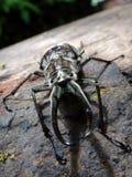 Schwarzer Spinnendschungel Bolivien Lizenzfreie Stockbilder