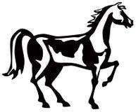 Schwarzer Stallion Stockfotos