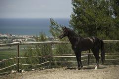 Schwarzer Stallion auf der Ranch Lizenzfreie Stockfotos