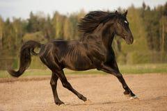 Schwarzer Stallion im Sonnenuntergang Lizenzfreies Stockbild
