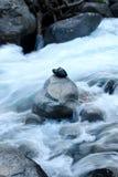 Schwarzer Stein über wildem Fluss an Pyrenäen-Bergen stockfoto