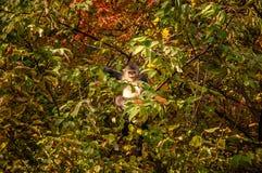 Schwarzer stupsnasiger Affe Yunnans Lizenzfreies Stockfoto