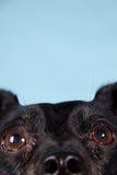 Schwarzer Terrierabschluß oben stockbild
