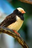 Schwarzer und beige Vogel Lizenzfreie Stockbilder