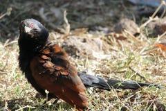Schwarzer Vogel Stockbild