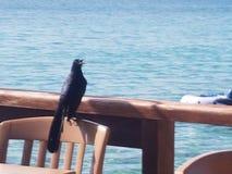 Schwarzer Vogel lizenzfreie stockbilder