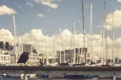 Schwarzer Vogel im Jachthafen Lizenzfreie Stockfotos