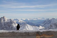 Schwarzer Vogel zugspitze Alpengebirgsschneeski im garmisch Deutschland Landschaft des blauen Himmels des Winters Lizenzfreie Stockfotografie