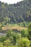 Schwarzer Wald Stockfotos