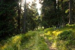 Schwarzer Wald Stockfotografie