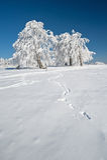 Schwarzer Wald Stockbilder