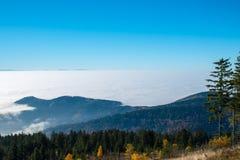 Schwarzer Wald Lizenzfreies Stockbild
