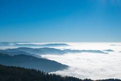 Schwarzer Wald Lizenzfreies Stockfoto