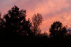 Schwarzer Wald bei einem roten Sonnenuntergang mit Wolken Stockfotografie