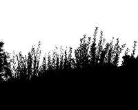 Schwarzer Waldschattenbild Getrennt auf weißem Hintergrund lizenzfreie abbildung