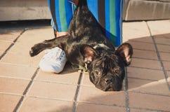 Schwarzer Welpe der französischen Bulldogge, der auf Pflasterung zwischen weiblichen Beinen liegt lizenzfreie stockfotografie