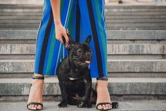 Schwarzer Welpe der französischen Bulldogge, der auf Treppe zwischen weiblichen Beinen sitzt lizenzfreie stockbilder