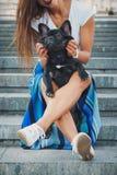Schwarzer Welpe der französischen Bulldogge, der auf Treppe zwischen weiblichen Beinen sitzt lizenzfreies stockbild