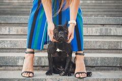 Schwarzer Welpe der französischen Bulldogge, der auf Treppe zwischen weiblichen Beinen sitzt stockbilder